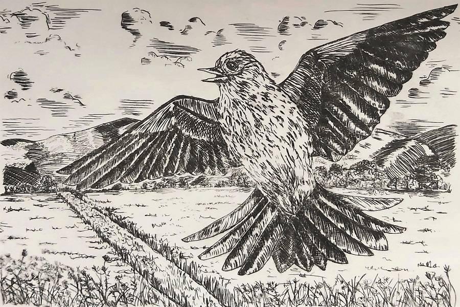 A Skylark Sings at Baldoon By Rosie Dobson